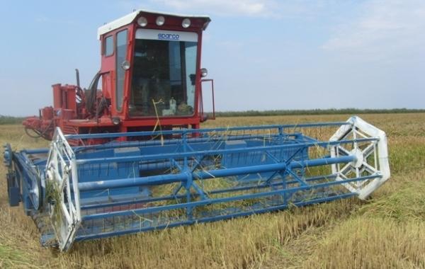 ЗАО Агрофирма, уборка риса