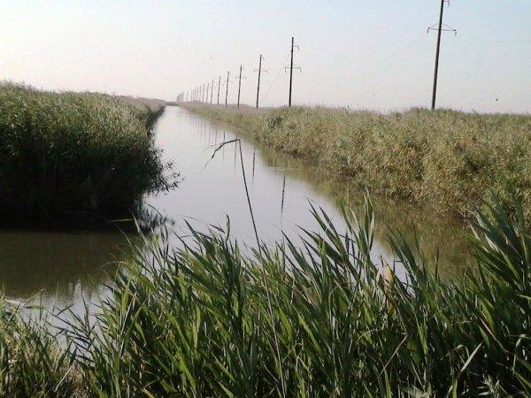 Канал рисовой системы «Сбросной»